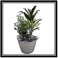 Planted Arrangement