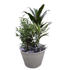 Planted Arrangement (Florist Choice Seasonal)