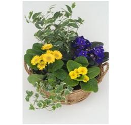Seasonal Planter (Florist Choice, From...)