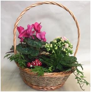 Planted Basket Arrangement (Florist Choice)