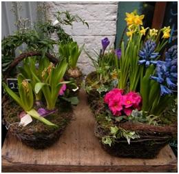 Planted Arrangement (Needs a Few Days Notice...)