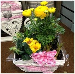 Planted Arrangement (Florist Choice, Seasonal)