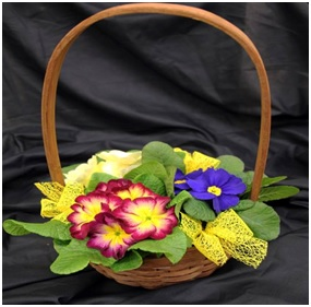 Planted Basket (Florist Choice)