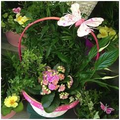 Planted Basket (Plants Vary Depending on Season...)