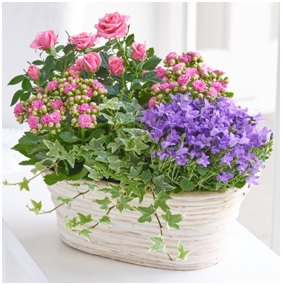 Mixed Flowering Planter (Florist Choice)