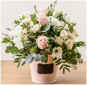Dawn (Florist Choice)