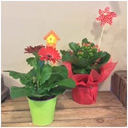 Plants (Contact Florist for Prices and Selection)