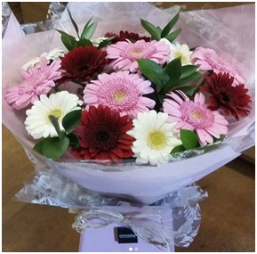 Gerbera Bouquet (Florist Choice)