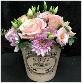 Pot Arrangement Gift (Florist Choice)