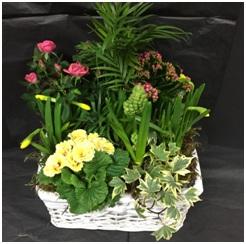 Planted Basket (Florist Choice)