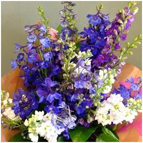 Blue Moon (Florist Choice)
