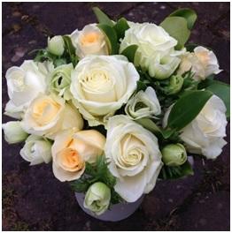 Peaches and Cream Roses