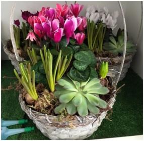 Arrangement (Florist Choice)