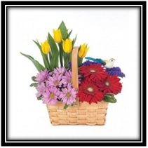 Basket of Colour