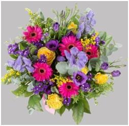 Brilliance HT (Florist Choice)