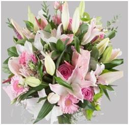 Misty Pink HT (Florist Choice)