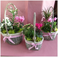Mixed Cat Safe Bouquets