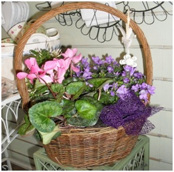 Planted Basket (Needs a Few Days Notice...)