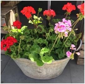 Planter (Florist Choice)