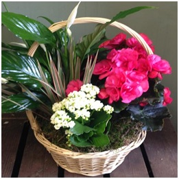 Planted Arrangement (Seasonal, Florist Choice)