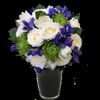Rose-Iris HT from