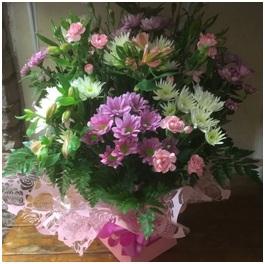 Pink Mixed Aqua (Florist Choice)