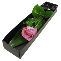 Pink Rose Presentation