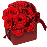 Luxury Red Rose Collection