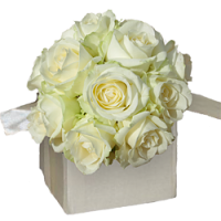 Luxury Cream Rose Collection