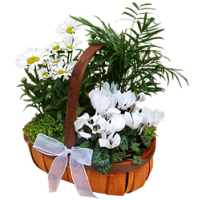 White Planted Basket